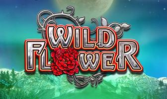 BTG - Wild Flower