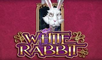BTG - White Rabbit